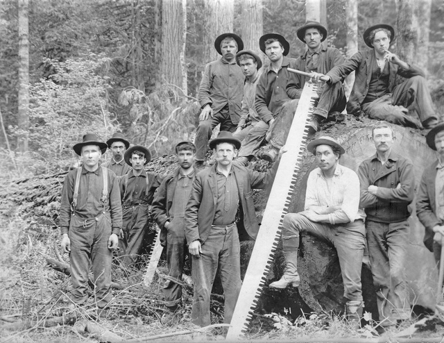 Loggers with saw next to tree