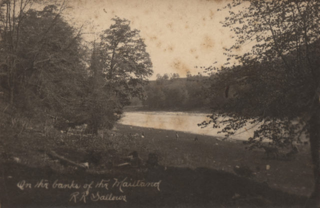 On the banks of the Maitland, date unknown