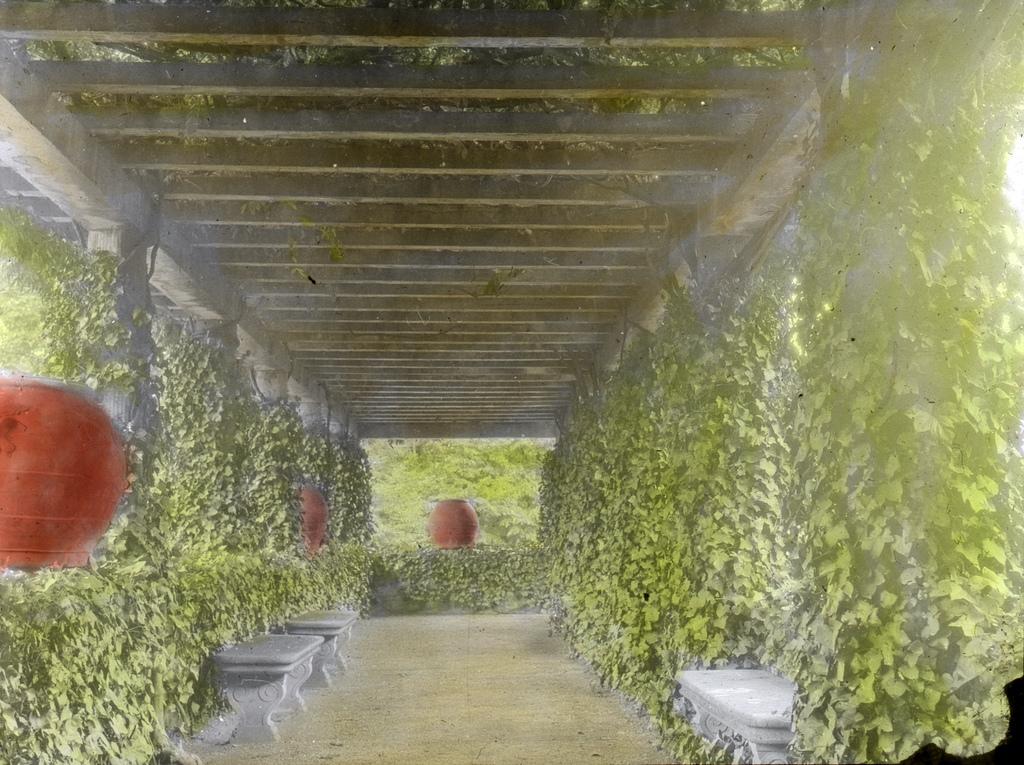 Palmieri, Firenze – Pergola, Wisteria across from pool & tennis court