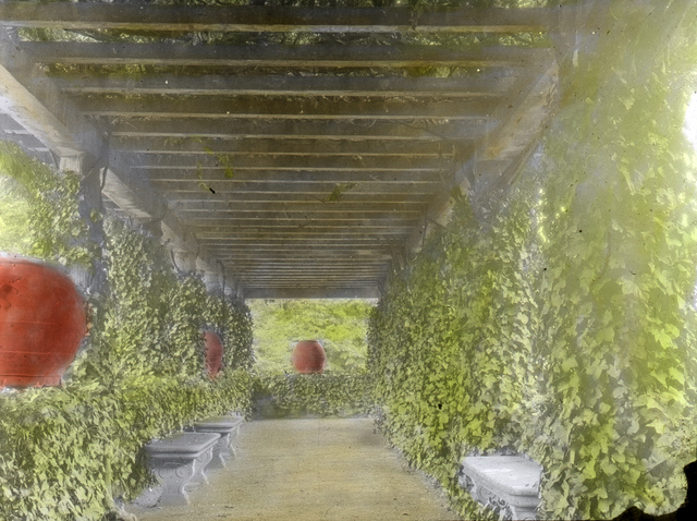 Palmieri, Firenze – Pergola, Wisteria across from pool & tennis court