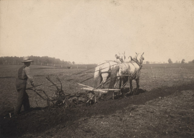 Ploughing, date unknown