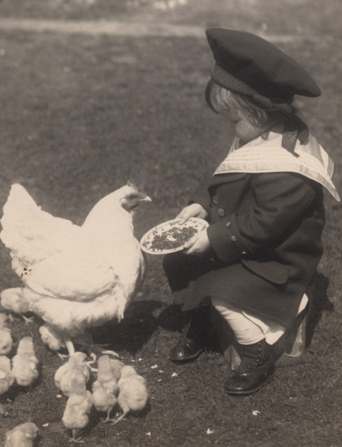 Small boy feeding chickens, date unknown