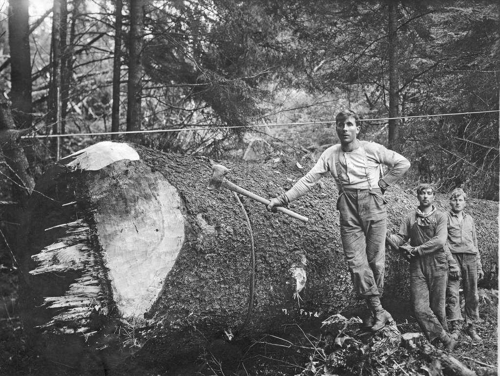 Three loggers next to downed tree