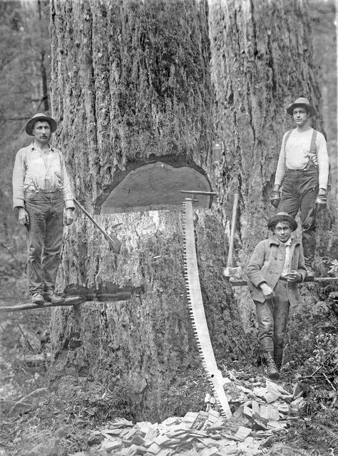 Three loggers with axes and saw