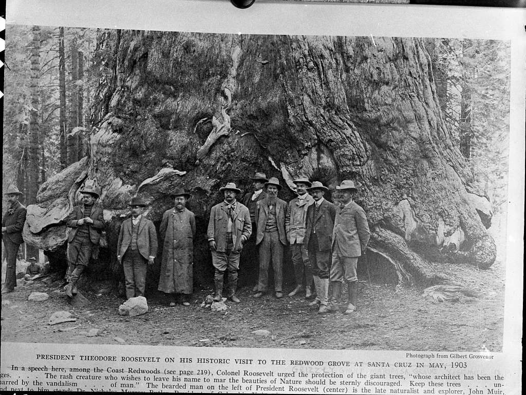 Mariposa Grove, Yosemite National Park, Misc. Groups, Theodore Roosevelt's visit to the Grizzly Giant, R to L: Benjamin Ide Wheeler, Private Secretary Loeb, Nicholas Murry, Butler President Columbia U