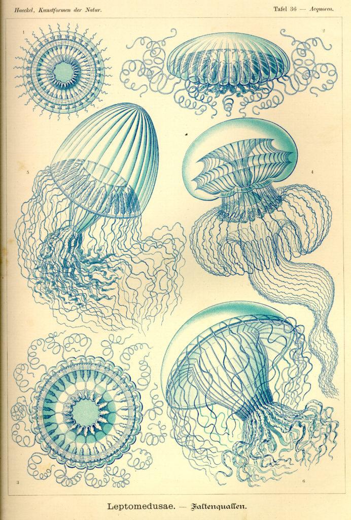 Ernst Haeckel Kunstformen Natur Plates Circa 1904