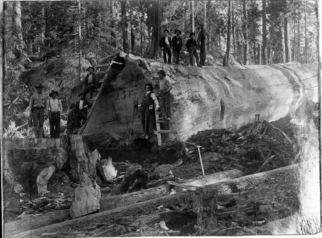logging, group of loggers in Converse Basin