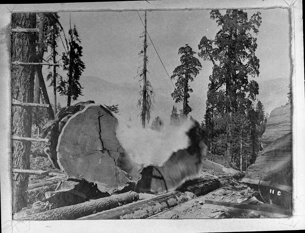Logging, Sequoia stump being blasted apart, from Ed. Bryant's album