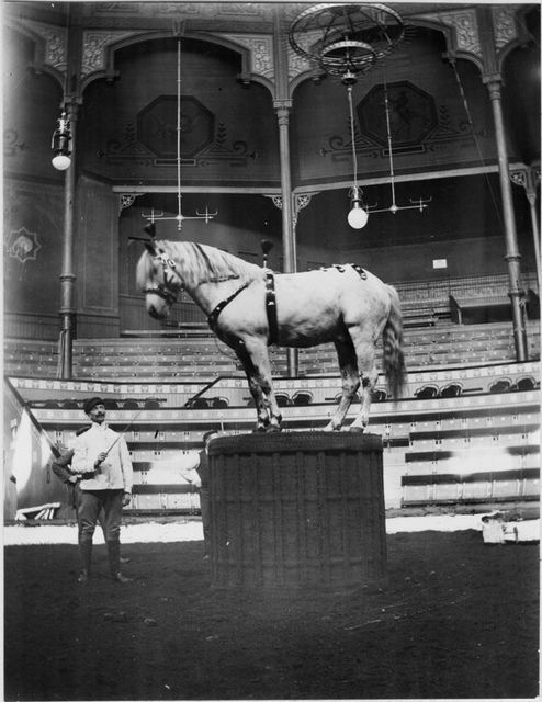 Horse at circus in Stockholm 1905