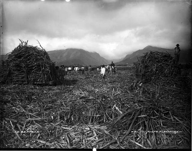Wailuku Sugar Plantation (1), photograph by Brother Bertram