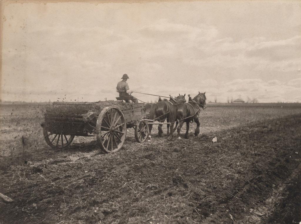 Разбрасывание навоза, 1906 год