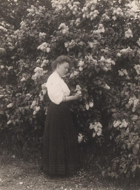 Woman picking lilacs, 1907