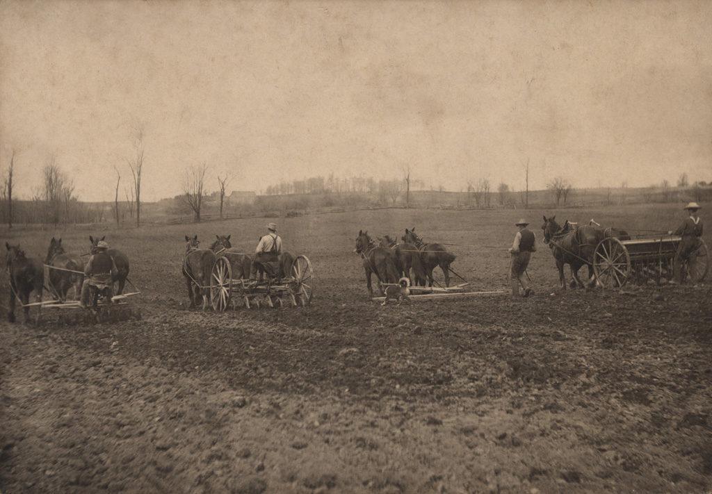 Культивирование, боронование, посев заднего вида, 1908 год