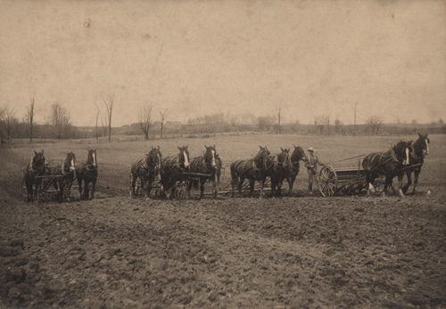 Весенний посев, 1908 год