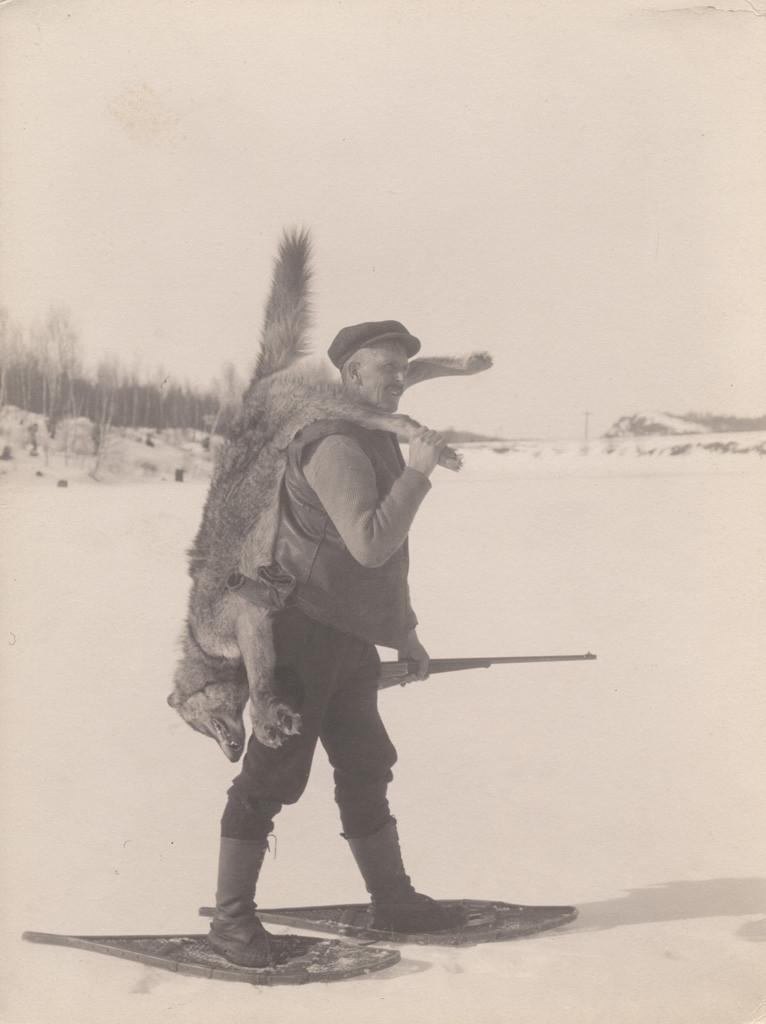 Канадский лесной волк, 1919 год