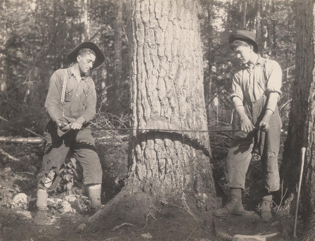 Вырубка сосны, 1917 год