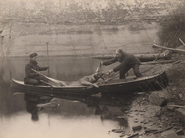Deer, 1909