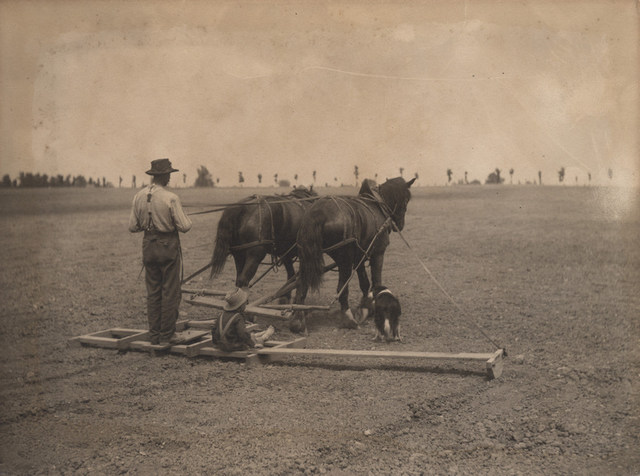 Levelling the land, 1909