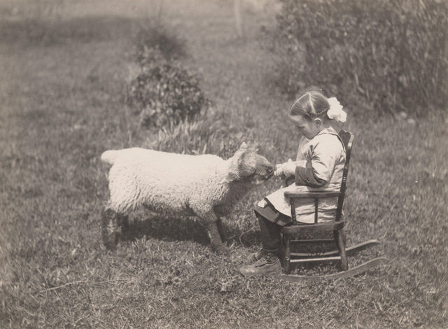 Little girl bottle feeding lamb, 1919