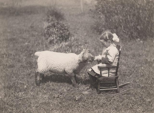 Little girl bottle feeding lamb, 1919