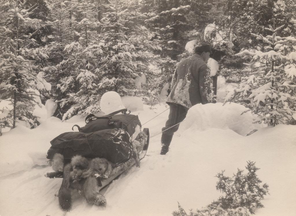 Man pulling sled, 1917