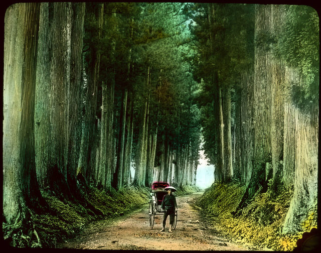 Man with rickshaw on tall tree lined dirt road.