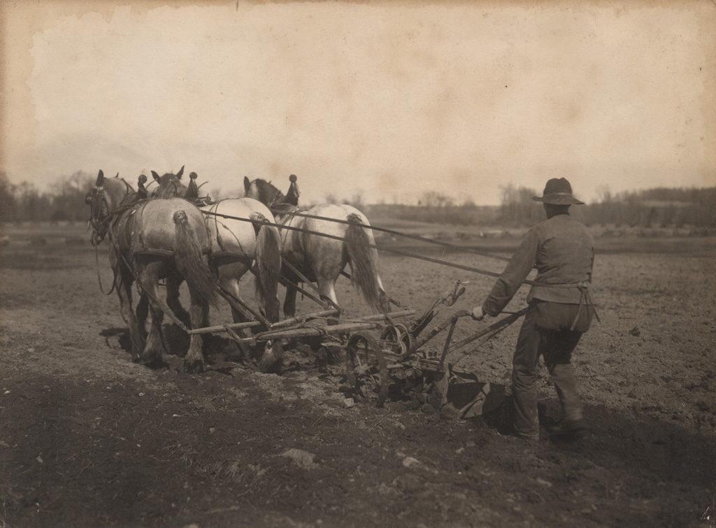 Пахота, 1910 год