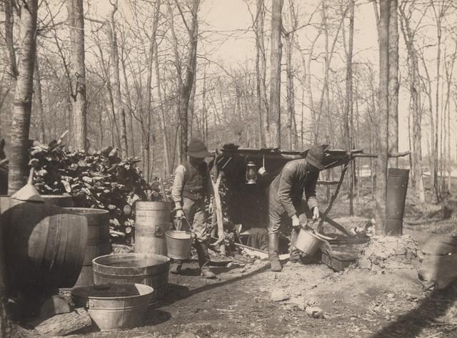 Pouring sap, 1908