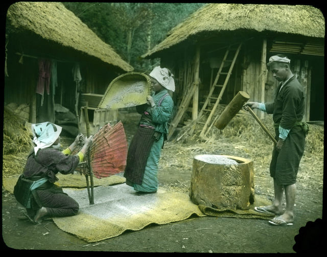 Two women winnowing rice and man pounding rice flour.
