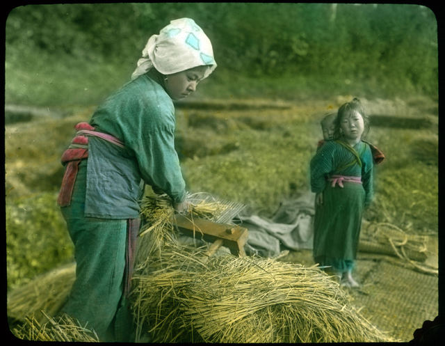 Woman separating rice from chaff with steel comb.