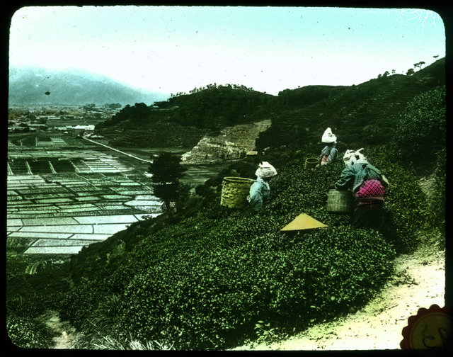 Women working on hillside; rice fields and village below.