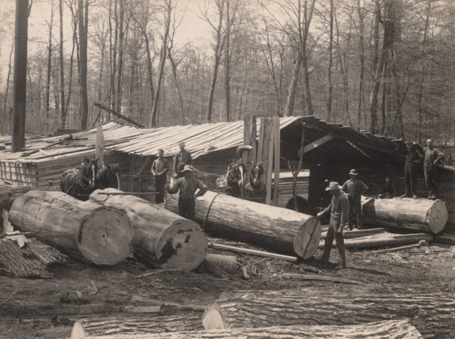 Moving logs, 1911