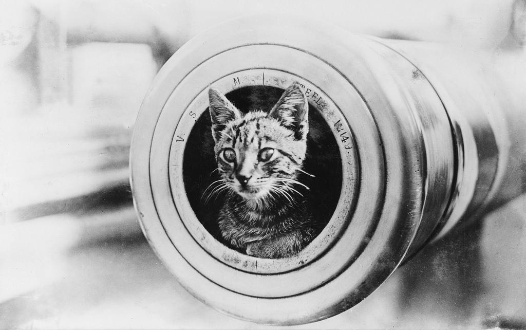 A cat on HMAS Encounter