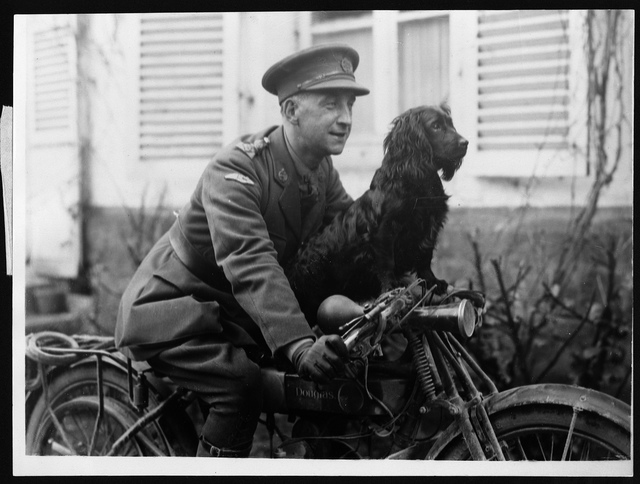 Stunter, the clever mascot of the Tank Corps who, owing to his experience gained by riding about in Tanks, can balance himself on the bars of a motor-bicycle