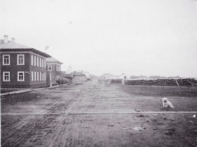View of street and the dog - Onega, Arkhangelsk region, Russia, White Sea.