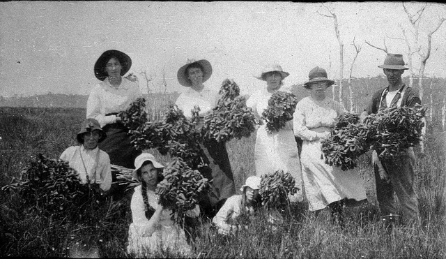 McLaren family picking Christmas Bells at Lime Burners Creek - Port Macquarie, NSW, 2 December 1918, by Harry McLaren