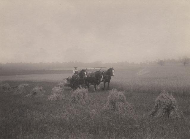 Binding grain, 1919