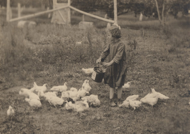 Winnie feeding chickens, 1920