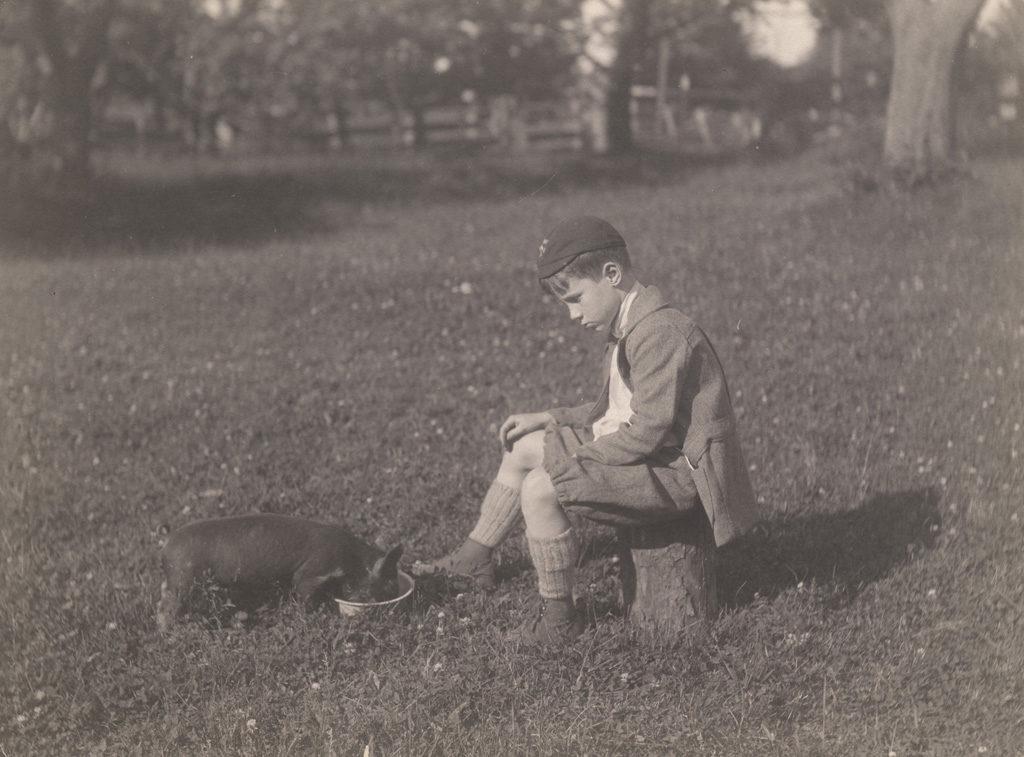 Кормящая свинья, 1922 год