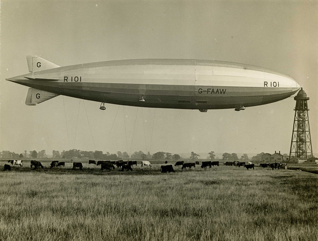 R101 and cows