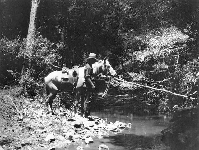 StateLibQld 2 393269 Allan Andison and his horse at Saddletree Creek, Bunya Mountains, 1929