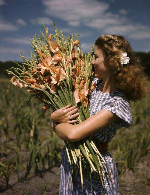 Unidentified woman holding gladiolus at Terra Ceia Island Farms, Florida