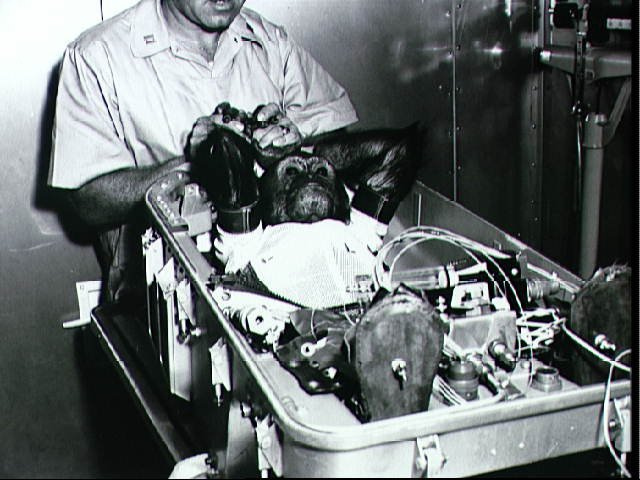 Chimpanzee Enos in a Space Suit