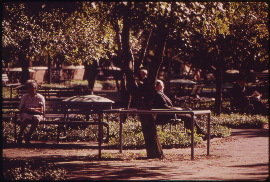 Quiet Greenness Of A City Park, August 1973