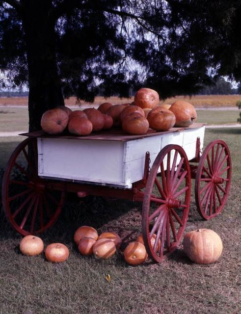 Roadside pumpkin stand in Georgia
