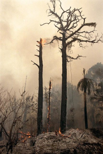 KENNEDY SPACE CENTER, FLA. --  Charred trees and brush in a wooded section of Kennedy Space Center still burn Monday, June 22, after lightning touched off three different fires Sunday evening in and around Kennedy Space Center at Tel IV, Ransom Road and Pine Island Road. This area is part of the Merritt Island National Wildlife Refuge operated by the U.S. Fish and Wildlife Service. The fires were a short distance from operational facilities at the space center and forced the closing of Florida State Route 3. The fires are being contained by firefighters from Kennedy Space Center and the U.S. Fish and Wildlife Service KSC-98pc766