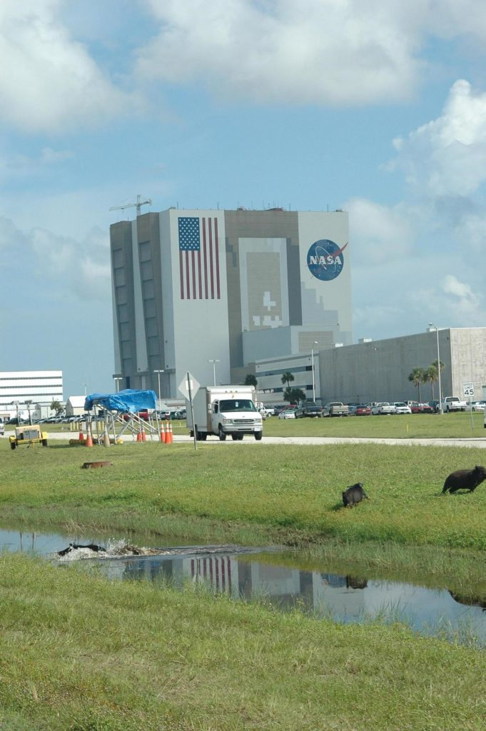 KENNEDY SPACE CENTER, FLA. -  A wild pig splashes through a canal near NASA Kennedy Space Center's Vehicle Assembly Building while its companions stay nearby on the bank.   The wild pigs have flourished in the environs around KSC, which shares a border with the Merritt Island National Wildlife Refuge, without many predators other than panthers and humans. Pigs were introduced to Florida in the 1500s and are now found statewide in wooded areas close to water. Pigs are omnivores, foraging on the ground and rooting just beneath the surface, which damages the groundcover. Wild pigs eat almost anything that has nutritional value, including tubers, roots, shoots, acorns, fruits, berries, earthworms, amphibians, reptiles and rodents. Appearance is similar to domestic hogs, but leaner, with a longer, narrower head and a coarser, denser coat.  Females may have two litters per year.  The piglets are weaned in a few weeks but remain with the mother for several months. KSC-05pd2262