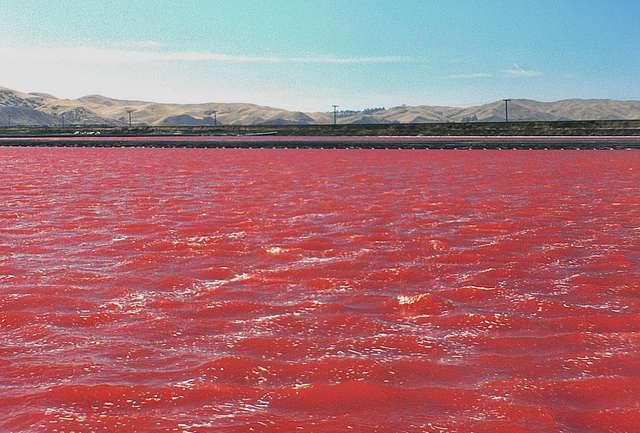 Lake Grassmere Saltworks   Marlborough, New Zealand