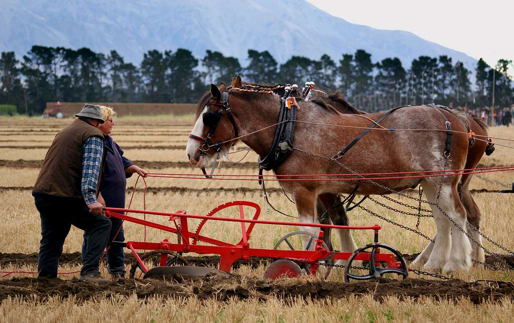 The ploughing match.