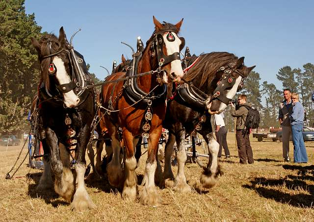 Horse ploughing.